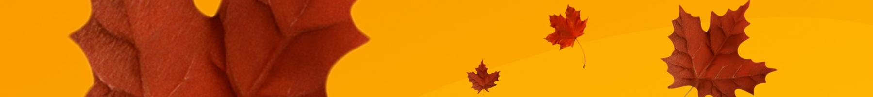 Maple leaves on yellow background